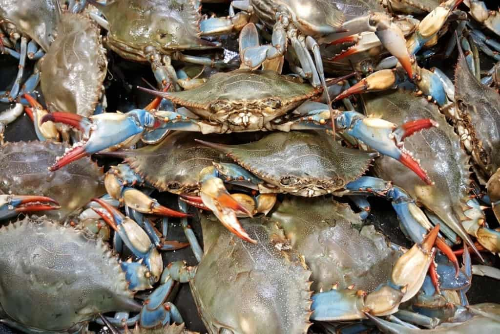 Blue crabs become soft shell crabs by shedding