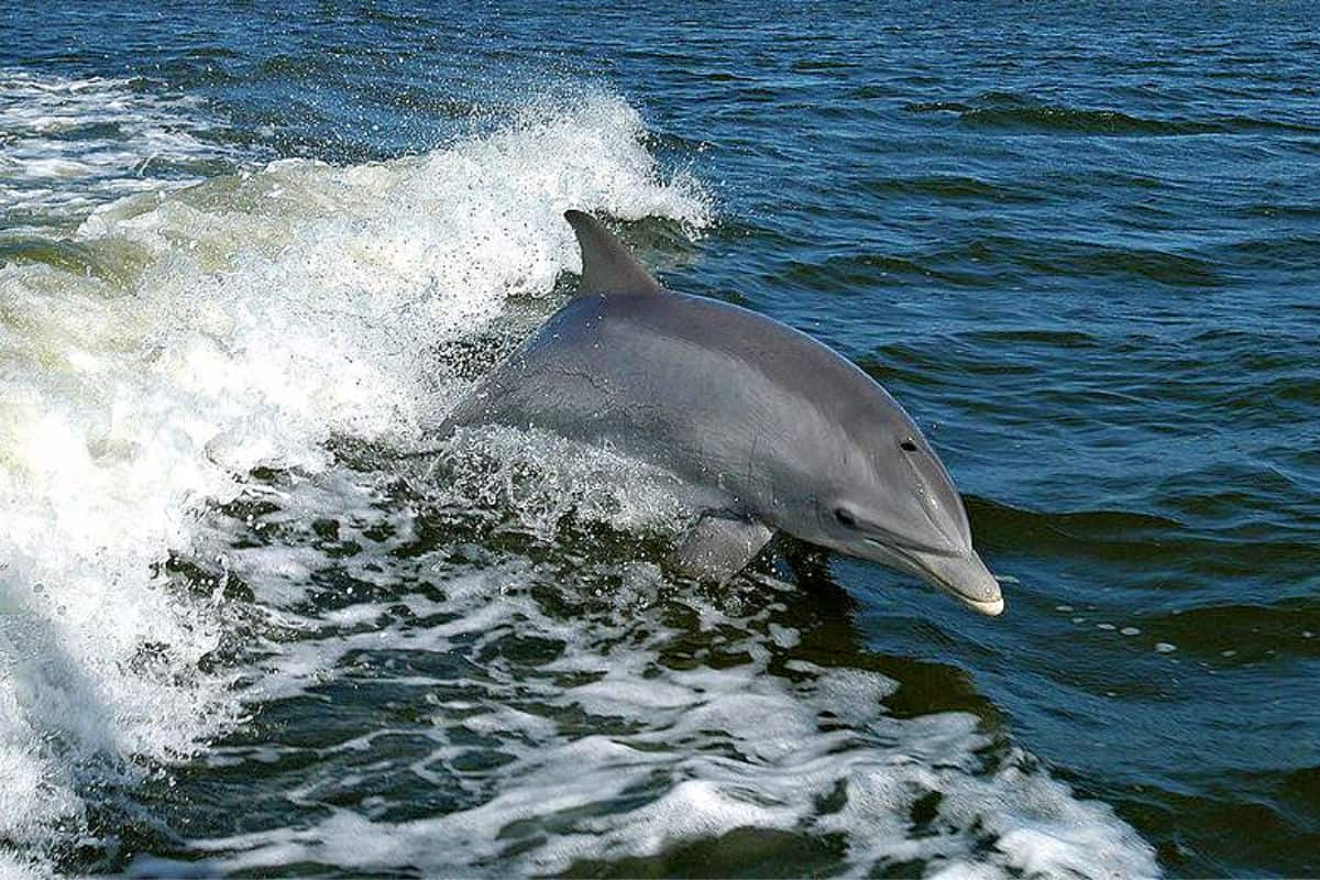 Captain Johnny's Dolphin Tours Outer Banks Cruises