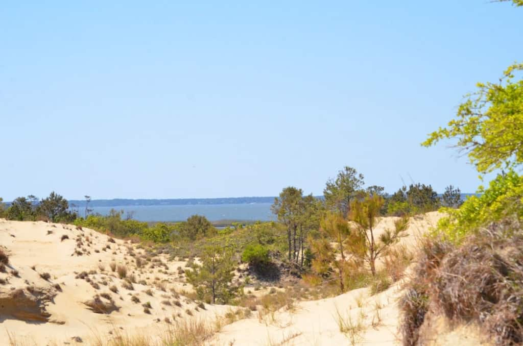 Run Hill Natural Area dunes in Kill Devil Hills, North Carolina Outer Banks