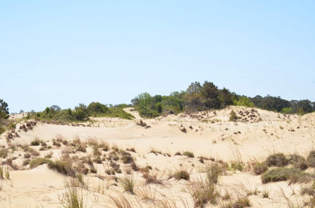 These incredible dunes are formed naturally by two prevailing winds, NE and SW. This is a hidden gem, Run Hill Natural Area
