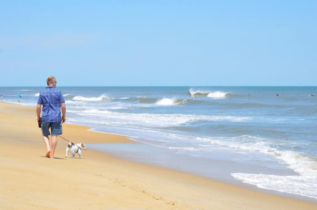 Dogs dig the beach in Kill Devil Hills and Outer Banks just like we do